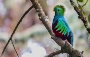 Birdwatching tour Explore Turrialba